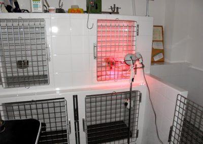 Hospitalización perros